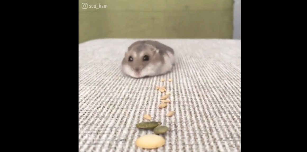 Little Roomba sucking up all the seeds.