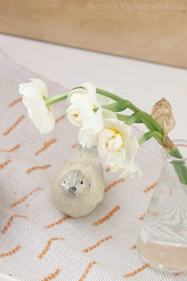 perunanarsissi,  Narcissus ´Bridal Crown`  スイセン