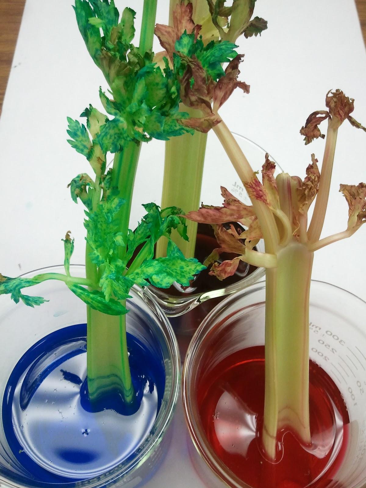 Mme Merriman S Classroom Smart Plants