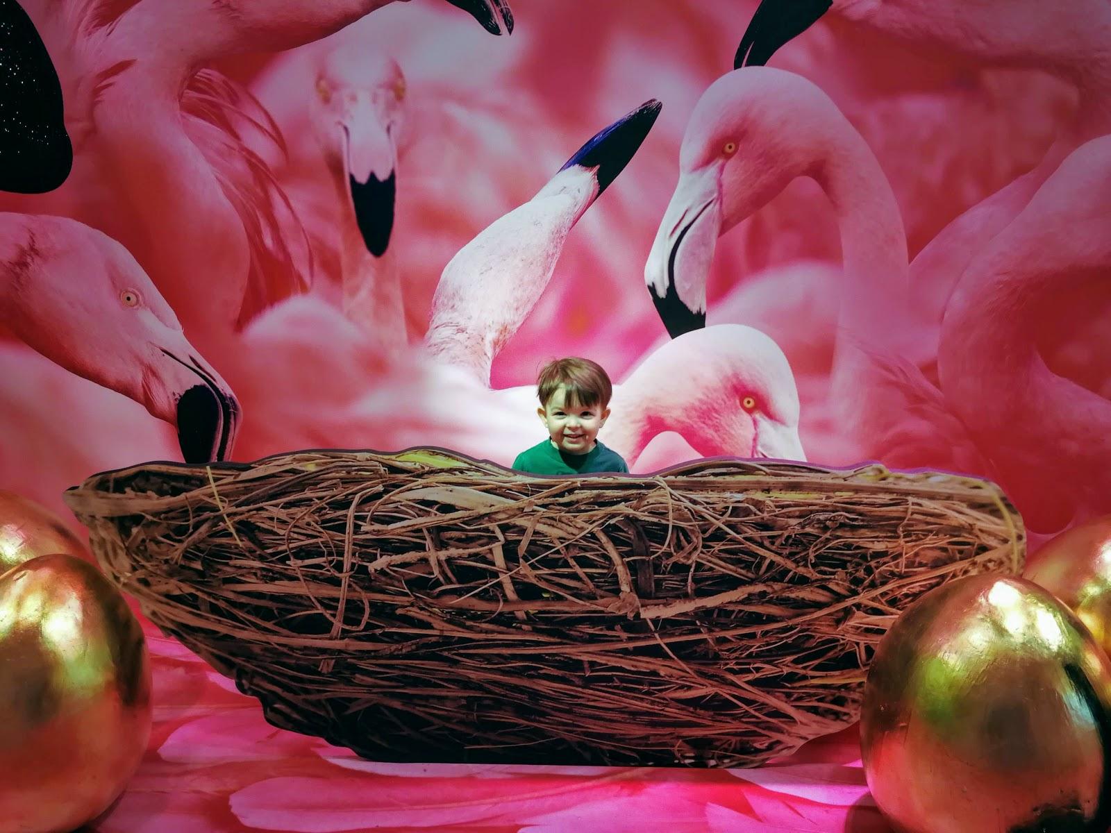 #The7TO Flamingo
