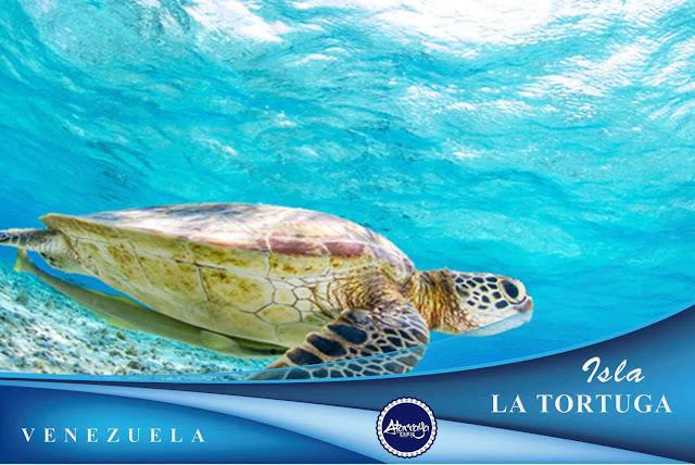 Isla la Tortuga Plan Atarraya Tours