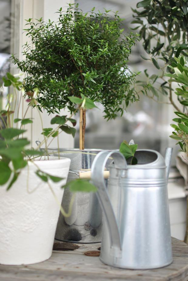 hannashantverk.blogspot.se myrtenträd myrten