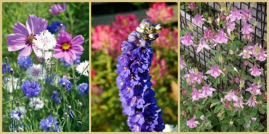 Flores rosas y azules