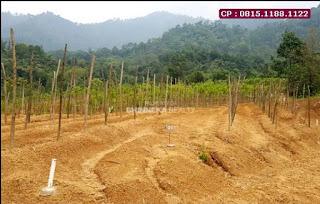 Jual Tanah Di Bekasi Murah, Kebun Vanili Dan Durian, Dekat Jalan,  WA : 0815.1188.1122
