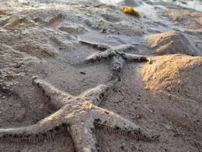 starfish-in-Panglao