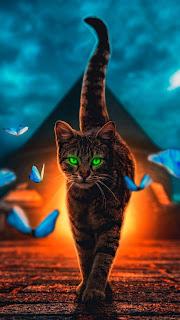 Cat Magical Walk Mobile HD Wallpaper