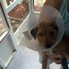 Palm Bay Police Search For Burglar Who Stabbed Dog