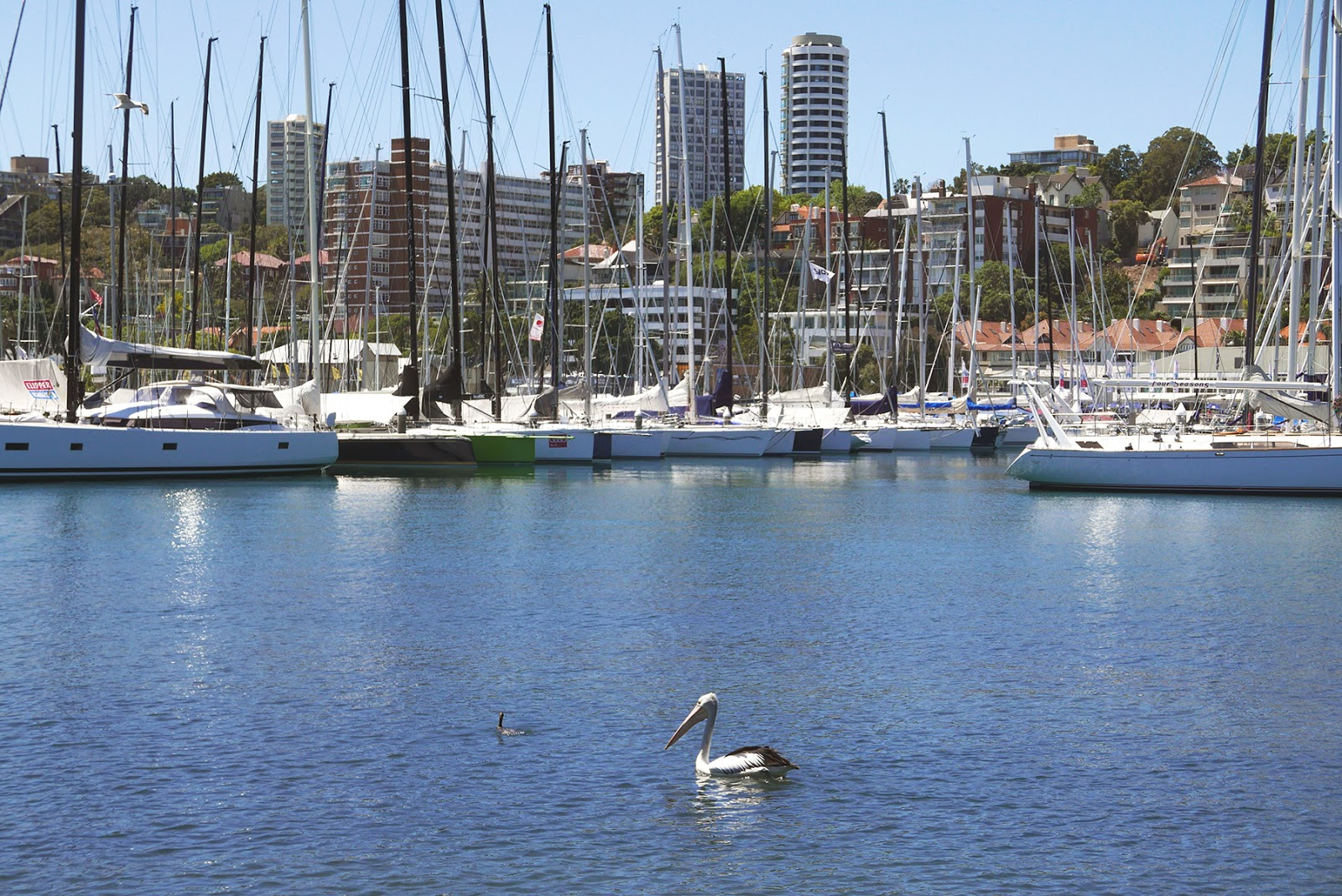 Euriental | luxury travel & style | Sydney Australia, Rushcutters Bay Park