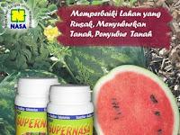 Pupuk pembesar buah semangka meningkatkan hasil panen