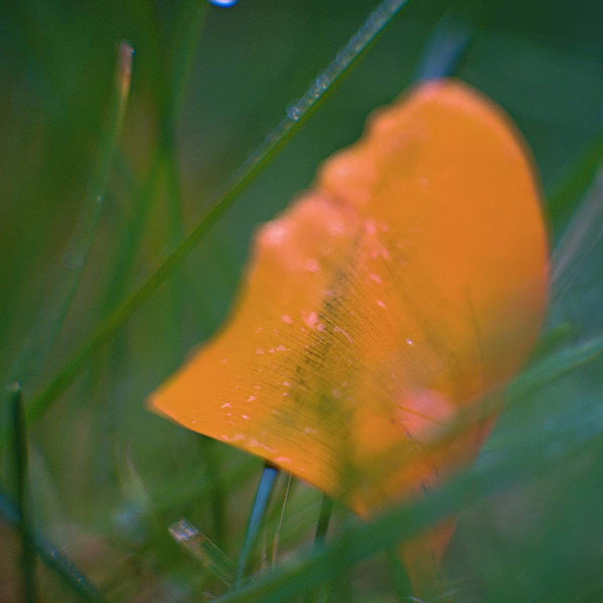 #294 ASTRO-KINO-COLOR V f1.5 50mm – Abgefallenes Blütenblatt