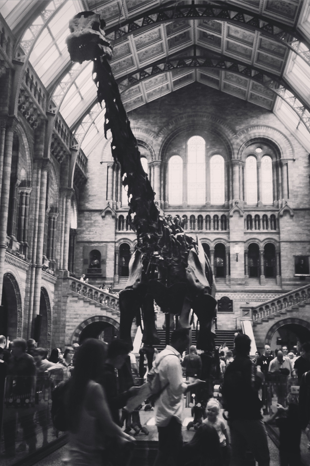 Hello Freckles Sunday Summary Dippy Diplodocus Natural History Museum London