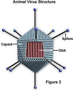 Features of Influenza Virus