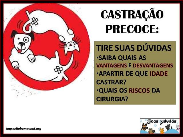 CASTRA%C3%87%C3%83O+PRECOCE.jpg