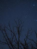 Kometa 46P/Wirtanen, zdjęcie z 25.12.2018 r. (widoczna na prawo tuż przy środkowym drzewie jako delikatne zielonkawe rozmyte pojaśnienie) Credit: Judy Lundquist. Kentucky, Stany Zjednoczone. Olympus E-M5Mark II, f/2.8, ISO 1600, eksp. 1x40 sek.