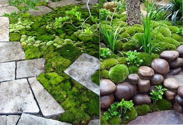 Garden Design Ideas: Moss Garden