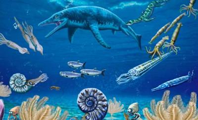 Pengertian Biota Laut, Jenis, Manfaat, Sifat Biota Laut Terlengkap
