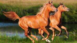 معلومات لا تعرفها على الأحصنة الجزء الأول