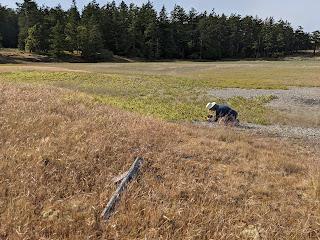 Botanizing on the salt marsh on the Henry Island preserve.