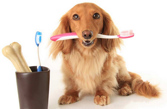Dog Bad Breath Home Remedy