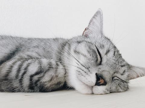 床にほっぺたをくっつけて寝ているサバトラ猫