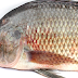 Man dies after accidently swallowing live Tilapia fish