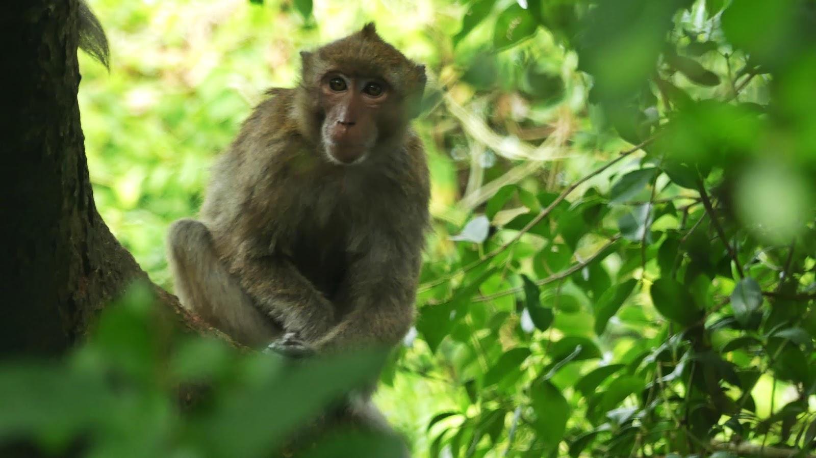 wyspa małp Cat Ba Monkey Island - małpy Wietnam