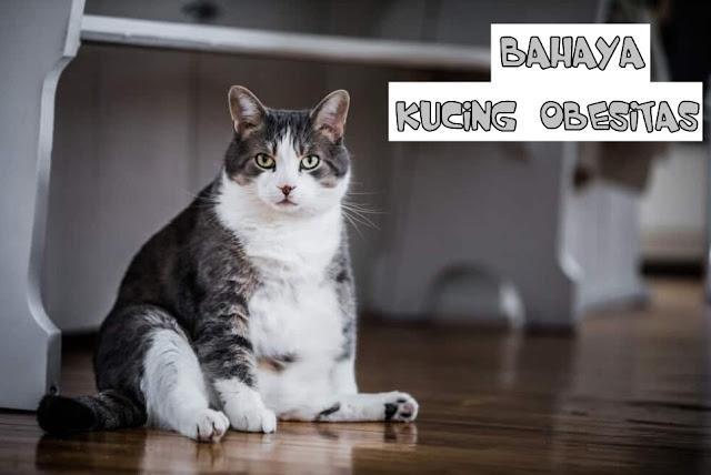 Bahaya Obesitas pada Kucing