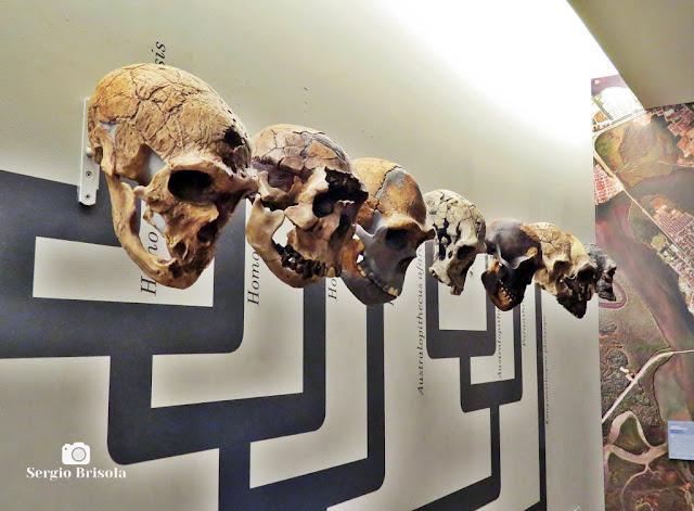 Close-up do Painel Evolução do Homem no Museu de Zoologia da USP - Ipiranga - São Paulo