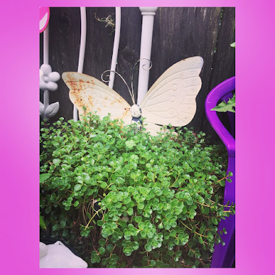 succulents plants in a large container with a tin butterfly decoration