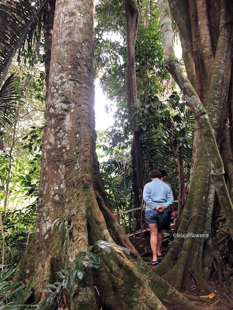 Boro-boro monyet, kadal saja enggan menampakkan diri. Tunggu Lawang hutan keramat yang hilang wibawanya || ©JelajahSuwanto