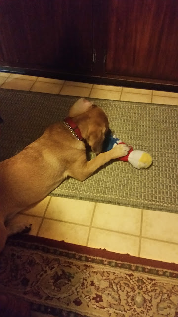 Puppy playing with Mr. Bill