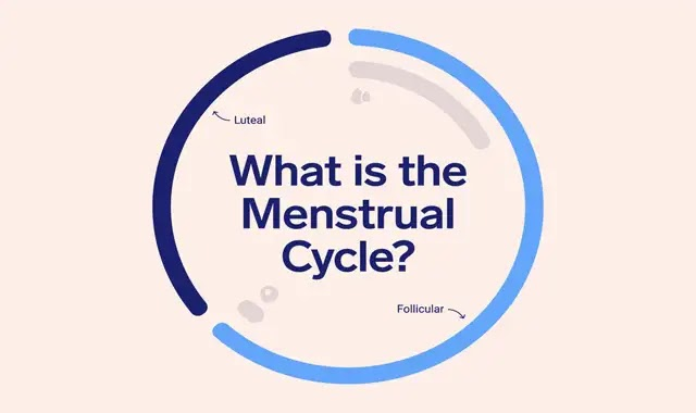 Periods fertility in the menstrual cycle