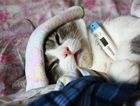 Unduh 78+ Gambar Kucing Sakit Terbaik Gratis