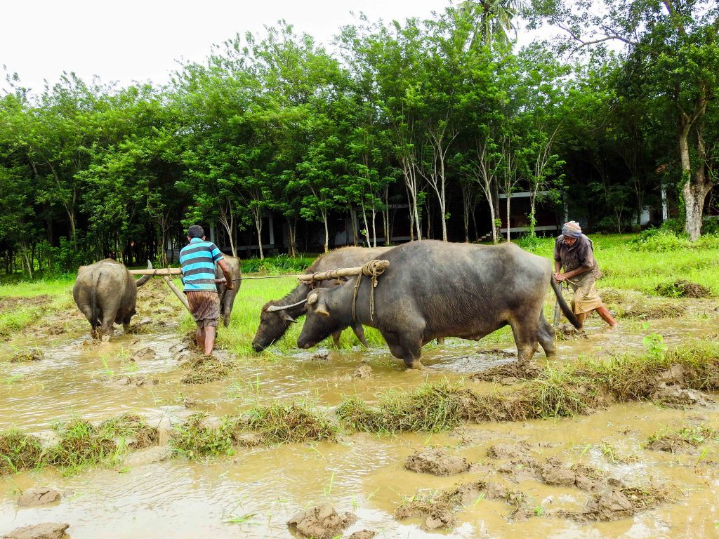Top 5 Agro Tourism Destinations Sri Lanka Village Trek in Hiriwaduna