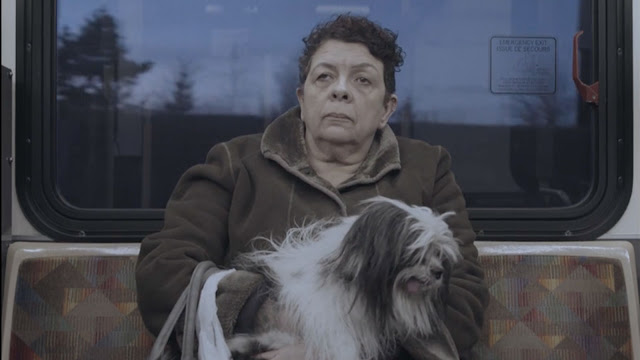A woman with a dog in her lap rides a bus home