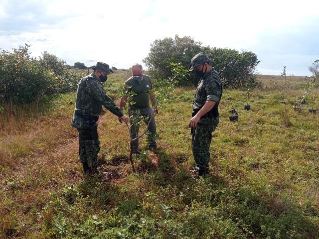 Policia Ambiental e Fundação Florestal fizeram reflorestamento com mudas de árvores nativas na Ilha