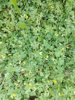 Maggio nell'orto biologico: erba alta