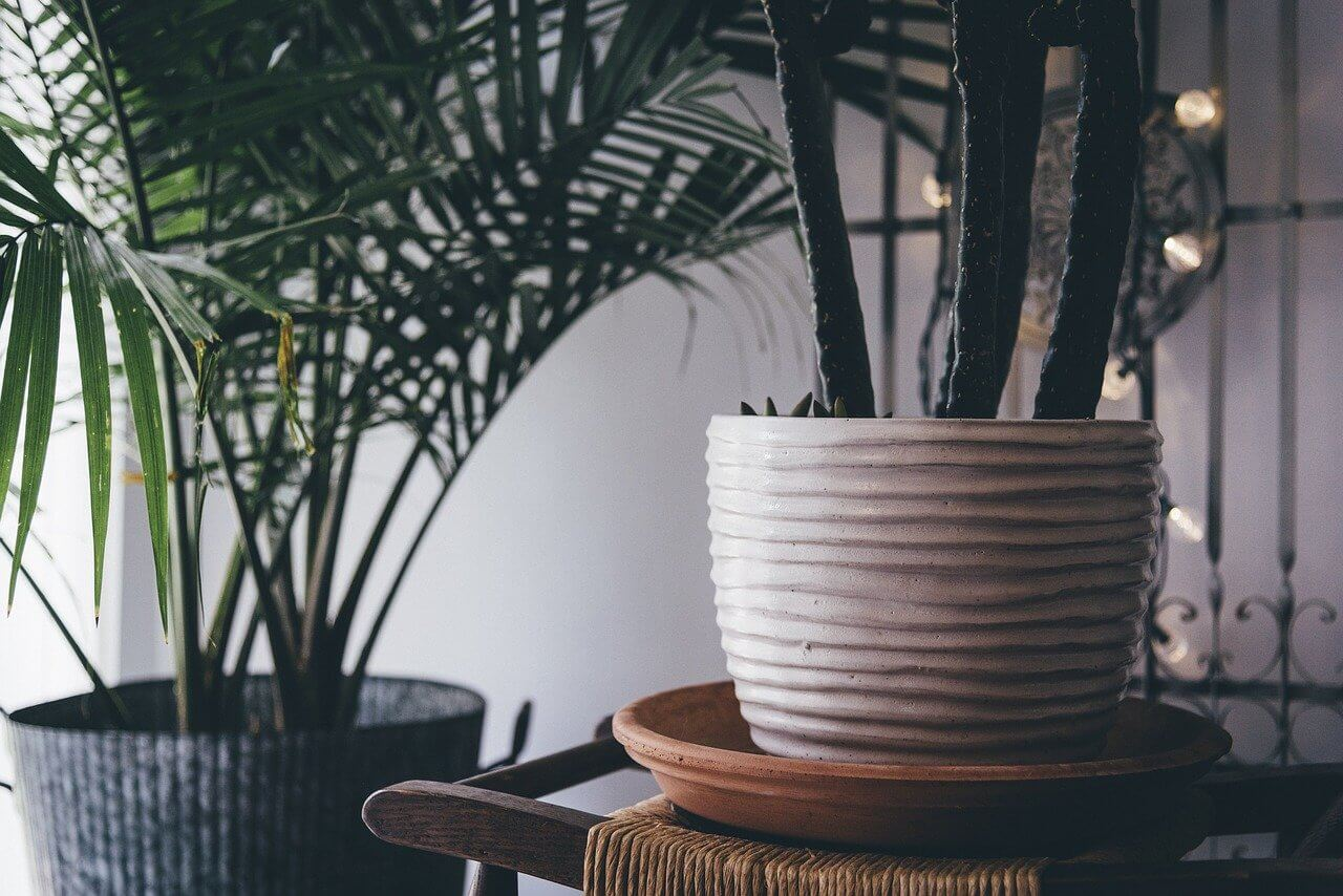 Sprucing Up Home While Stuck Indoors - Water Plants