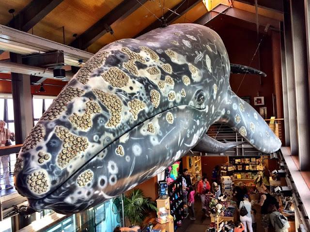 Museu e Centro de História Natural do Mar de Santa Bárbara
