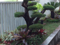 Jasa Taman Rumah di Magetan - Tukang Pembuatan Taman dan Kolam Relief Tebing Murah di Magetan