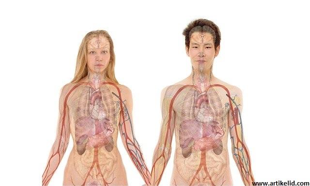 11 Cara Ampuh Ini Berguna Menjaga Kesehatan Organ Dalam Tubuh