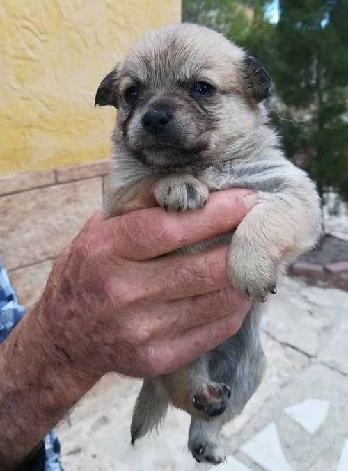 cachorros talla pequena 5