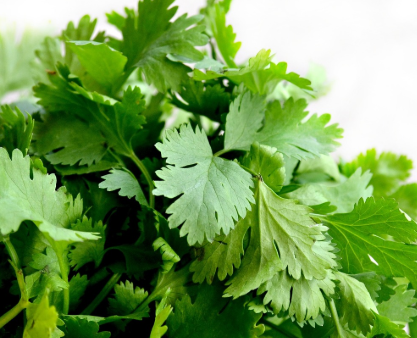 #Weight reduction Drink With Coriander Leaves#Health