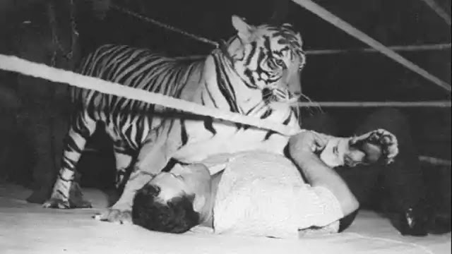5 Wrestlers who fought wild animals
