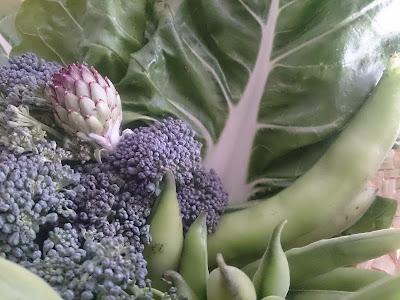 habas, brócoli, alcachofas y acelgas.