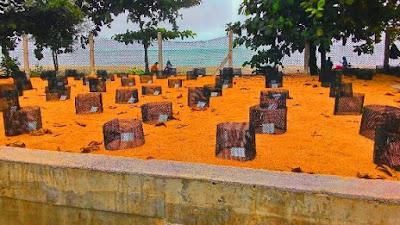 Pusat Penetasan Penyu Padang Kemunting pengkalan balak melaka