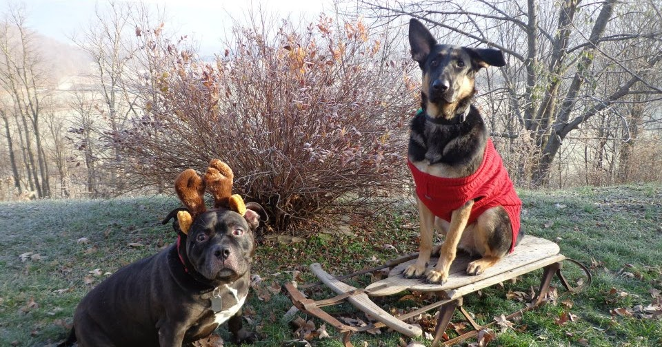 Pupcycled: Charity Christmas Gift Ideas for Eco-friendly Dog Owners