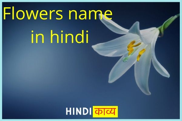 List of Flowers name in Hindi and english | Flowers name in Hindi (फूलों के नाम)