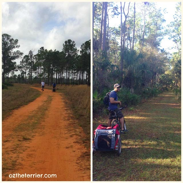 Biking paved and off-road trails at Highlands Hammock State Park