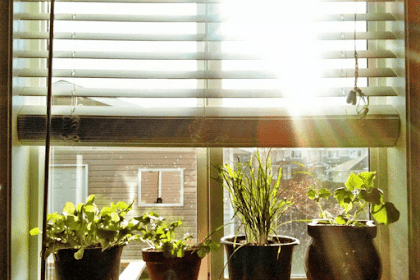 How to Grow Vegetables Indoors Ideas